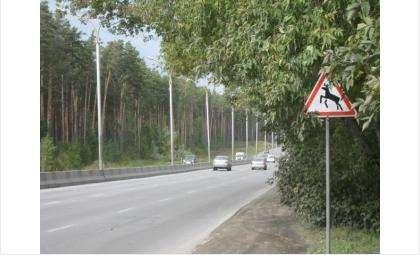 Будьте внимательны на дорогах! Иногда на них можно встретить крупных животных