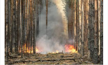Лесные пожары нужно тушить оперативно