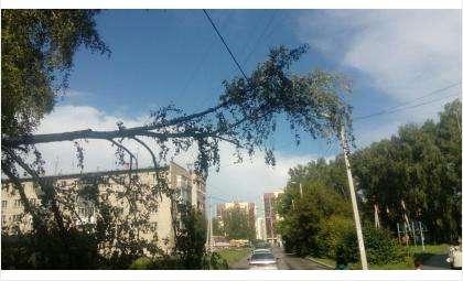 Ветер часто роняет старые и аварийные деревья