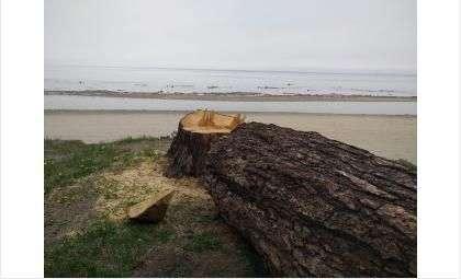 Ветровальные деревья представляют опасность