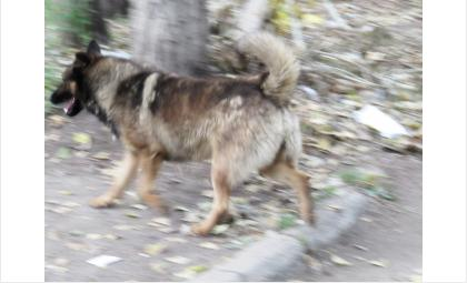 Собаки все чаще нападают на детей