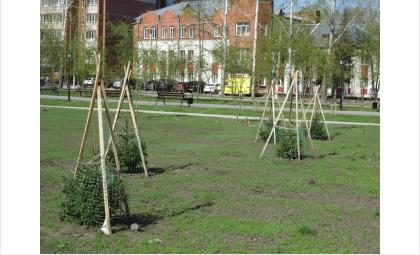 Озеленение парка началось в прошлом году и завершится в 2021 году