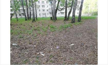 Роща около школы №12 в Бердске