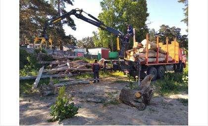 15 лесовозов топляка вывезли с пляжа «Старый Бердск»