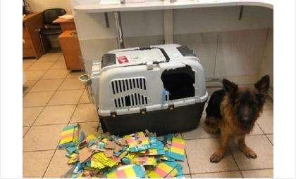 Тщательно приготовьте все документы и переноску для животного