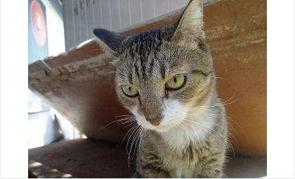 Фотография котика выбрана ради ваших улыбок