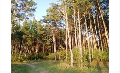 Сохранение леса - одна из важных задач