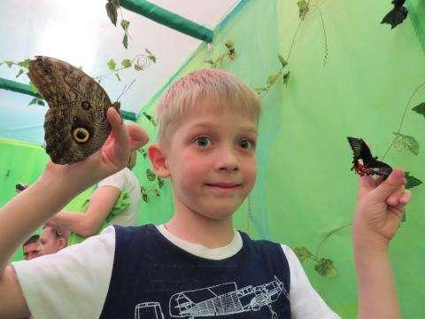 Выставка тропических бабочек открыта в Бердске