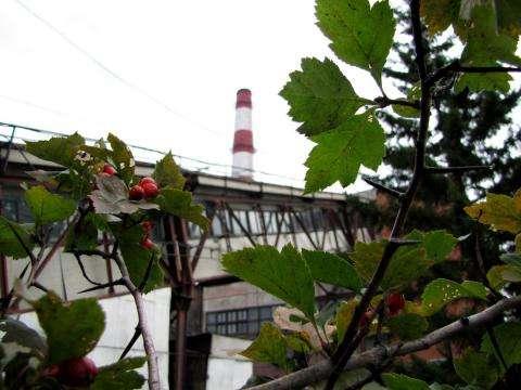 От тепла и горячей воды в Бердске 5 мая отключат центр города
