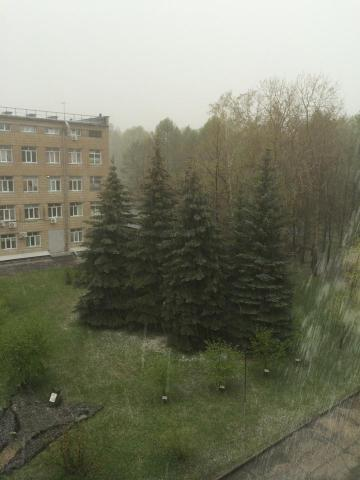 Град размером с ноготь выпал 13 мая в новосибирском Академгородке