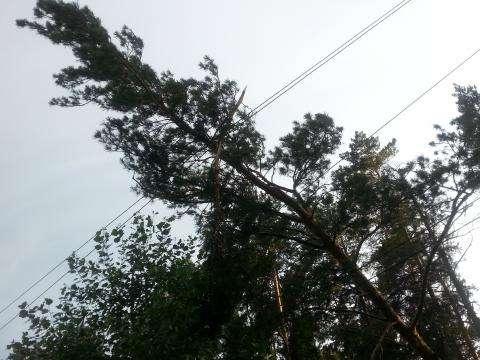 Дерево насмерть убило двух девочек в Бердске