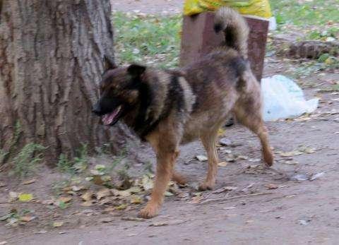 В Бердске увеличивается количество бродячих собак