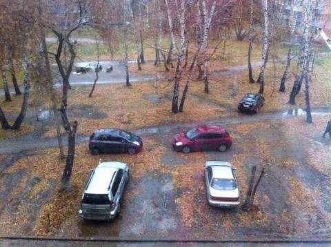 Парковки в Бердске: места хватит и машинам, и деревьям, и малышам