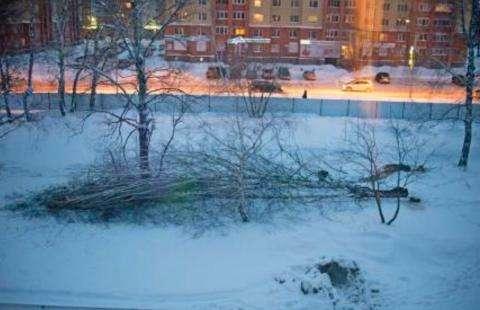 Вырубку берез в роще наблюдали жители дома №130 на ул. Кр.Сибирь, где скоро построят новый магазин