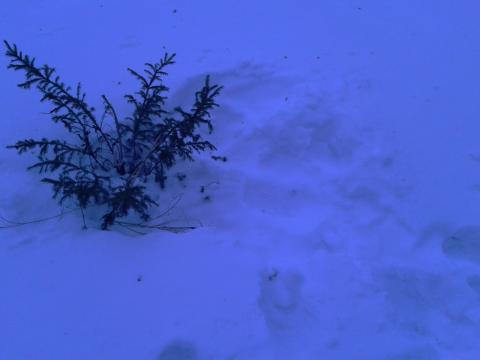 Две елочки из 10 срубили в сквере на ул. Лунной