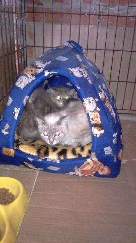 Осиротевшие котики очень слабы