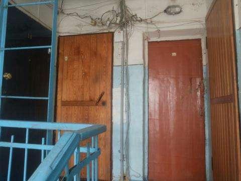 Иногда соседи по лестничной клетке невольно вынуждены мириться со странными жильцами